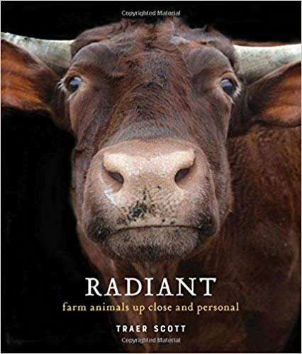 Radiant book cover art